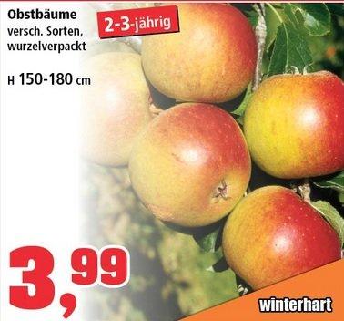 [Thomas-Philipps] Obstbäume - wurzelverpackt 2-3 jährig für 3,99 !
