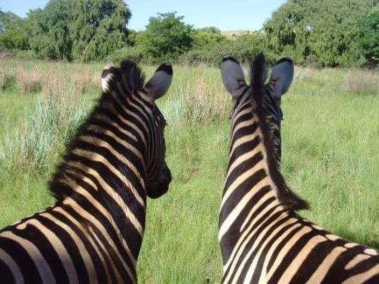 Super Günstig nach Südafrika [Open Jaw] Ams - Johannesburg - Fra auch in den Ferien
