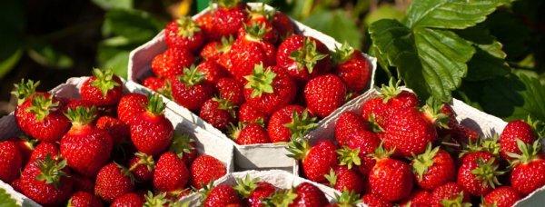 LIDL Erdbeeren 500g 0,88€ (bundesweit Supersamstag?)