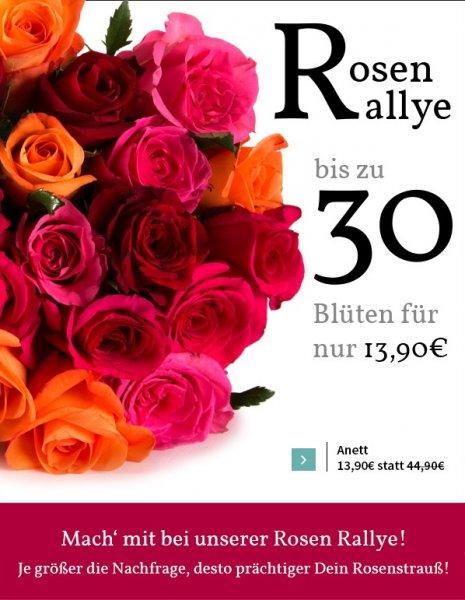 Miflora Rosen Rallye bis zu 30 Rosen für 19,80 inkl. VSK