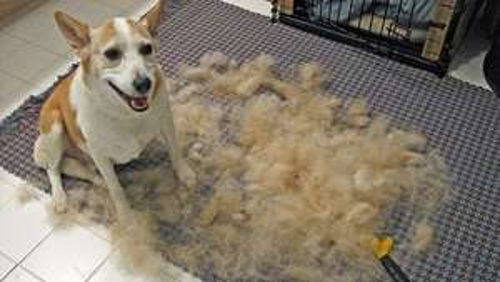Amazon :Gratis Eukanuba Hunde- oder IAMS Katzenfutter beim Kauf eines FURminators