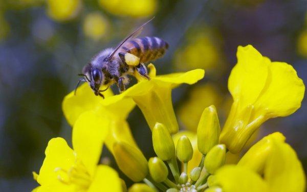 Gratis Saatgutmischung bienenfreundlicher Pflanzen