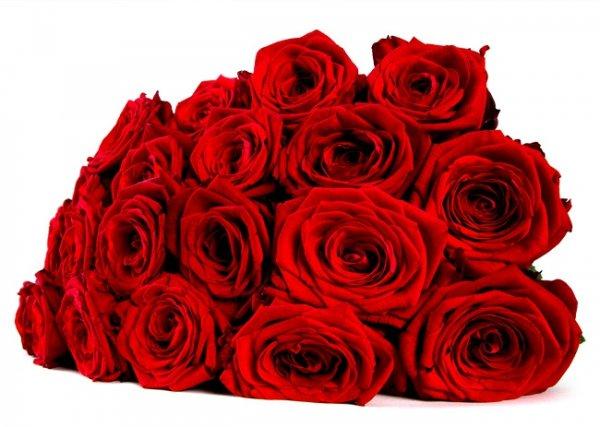 [UPDATE] Miflora | Lea | Zwanzig Red Naomi Rosen | 17,90€ | und andere Blumenarrangement ab 12,90€