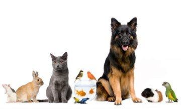 Div. Schnäppchen bzw Rabatte für Haustierzubehör bei Hundeland.de und Zooroyal.de