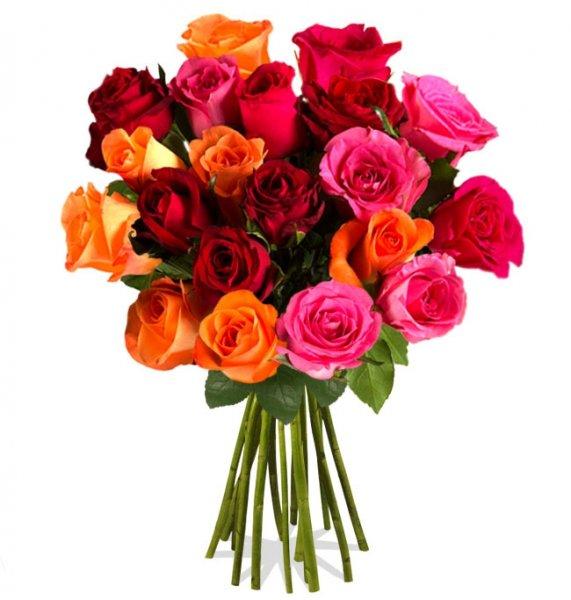 Miflora - 20 Rosen Rainbow (40 cm lang) für 14,90 €