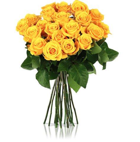20 gelbe Rosen für 16,90€ @Miflora