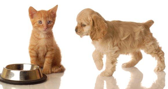 [Futterhaus] Trockenfutter | 1x kaufen 1x gratis | Katze Sanabelle 400g | Hund Bosch 1kg