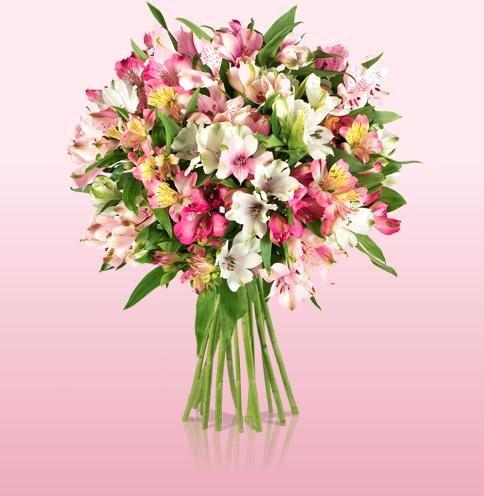 [Miflora] Blumen Happy-Hour JETZT bis 18 Uhr: Strauß bunter Alstromeria für 12,90€ statt 24,90€ inkl. VSK