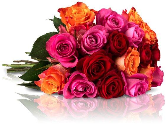 Rosenrallye bei Miflora - UPDATE: 30 bunte Rosen für 18,90€