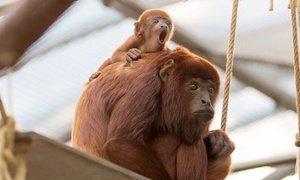 ( Groupon ) Zoo Köln Eintritt inklusive Aquarium für 9,95 € p.P.