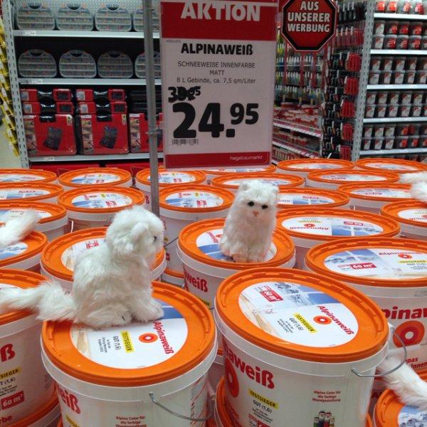 [Lokal hagebaumarkt Marktredwitz] Alpina Weiß mit Katze 8l