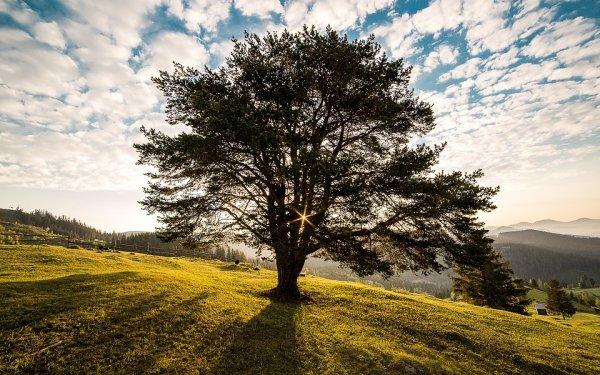 Kostenlos Baum Pflanzen !!