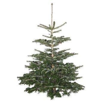 [OBI nur lokal?] Weihnachtsbäume / Echte Nordmanntanne ab 12,99 €