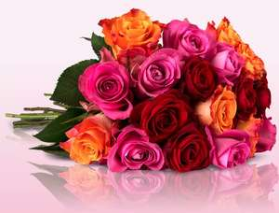 """28 bunte Rosen """"Sparkling Colours"""" für 18,90 @ Miflora"""