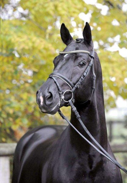 """Pferdezüchter aufgepasst - """"TOTILAS"""" Pferdesamen für 2.500€ statt für 8.000€"""