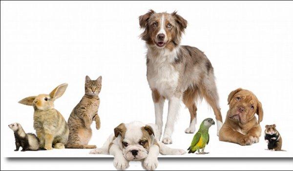 [Bundesweit] Übersicht der Tierfutterangebote der Kw 07 / 2016 Auch für Nager und Vögel heute wieder.