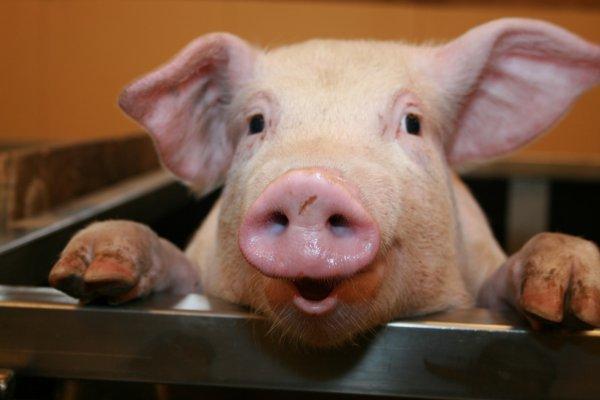 Netto MD Hackepeter (Schwein) 1kg = 2,70€ (-61%) / Kw8