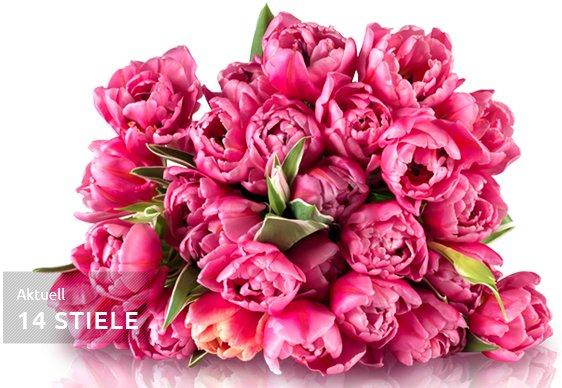 Tulpenrallye bei Miflora - 14-20 Tulpen für 18,90€ inkl VSK @ Miflora