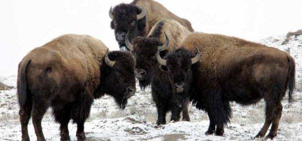 US-Nationalparks kostenlos