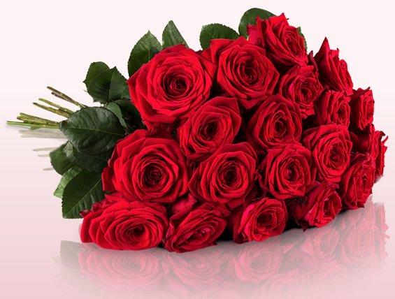20 Red Naomi Rosen mit großen Blütenköpfen und einer Stillänge von 50cm für 18,90€ @ Miflora