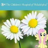 Verschicke 1x Gänseblümchen + Deinen persönlichen Gruß / Mitteilung an einen Patienten des Kinderkrankenhauses in Philadelphia