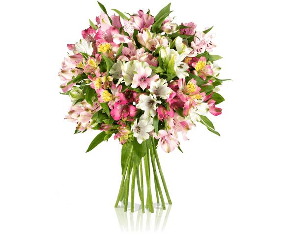 Pink Paisley für 16,90€ @ Miflora - Blumenstrauß mit 15 Alstromerien