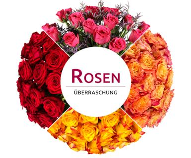 Rosenüberraschung im Crazy Thursday bei [Miflora] 18 - 25 Rosen für 16,90€