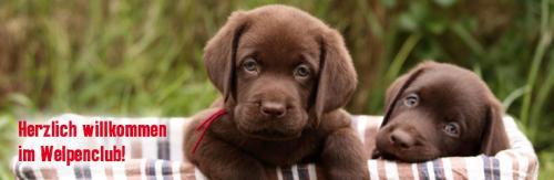 Gratis Hunde Welpen Willkommenspaket