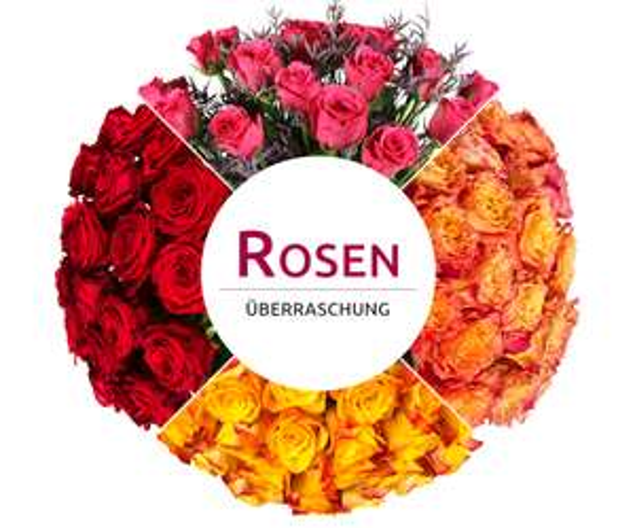Miflora Rosenüberraschung für 14,90€- man weiß nicht was man bekommt - 25-30 Stiele pinke, gelbe oder bunte Rosen