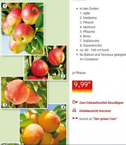 Zwergobstbäume bei Norma ab heute für 9,99 Euro