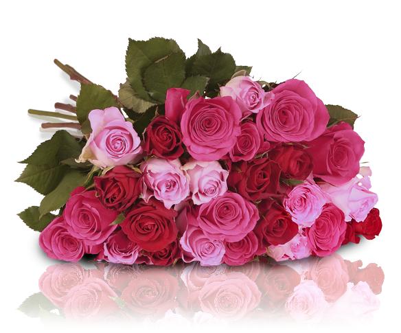 """Miflora """"PRETTY PINK"""" - 26 pinke und rote Rosen (~50 cm)"""