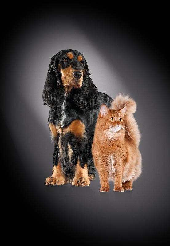 [GRATIS] Katzen- oder Hundefutter-Probe von Select Gold