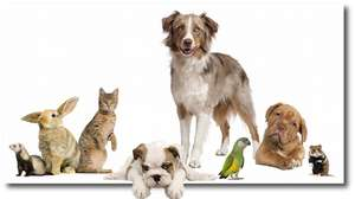 Übersicht der Tierfutterangebote der KW 45 / 2016 [Bundesweit]