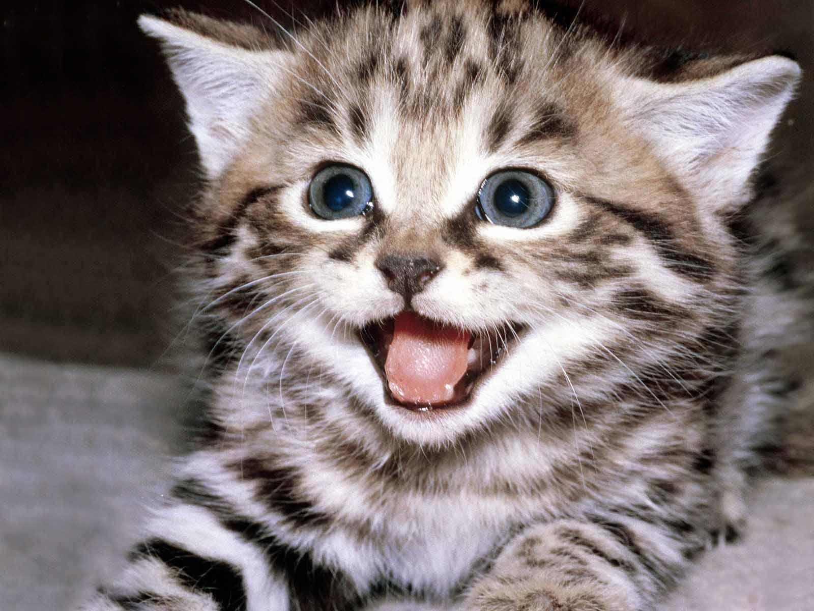 Katzenfutter: 10€ sparen ab 20€ Einkaufswert bei Amazon