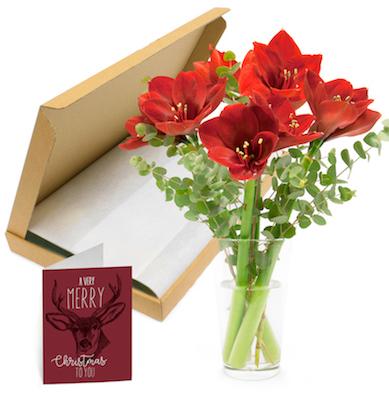 Amaryllis Blumenstrauß für den Briefkasten für 9,95€ inkl Versand
