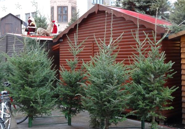heute ab 18.00 Uhr über 1000 kostenlose Weihnachtsbäume in Leipzig