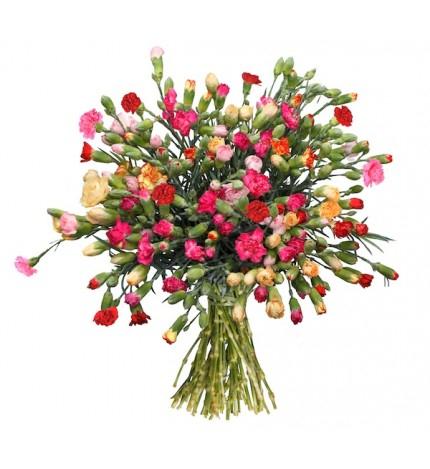 Blume Ideal: 44 Spray-Nelken (ca. 50cm länge) in vielen verschiedenen Farben --> Bis zu 200 Blüten --> 15,99 € statt 34,95 €  -> zzgl. 4,95 € VSK