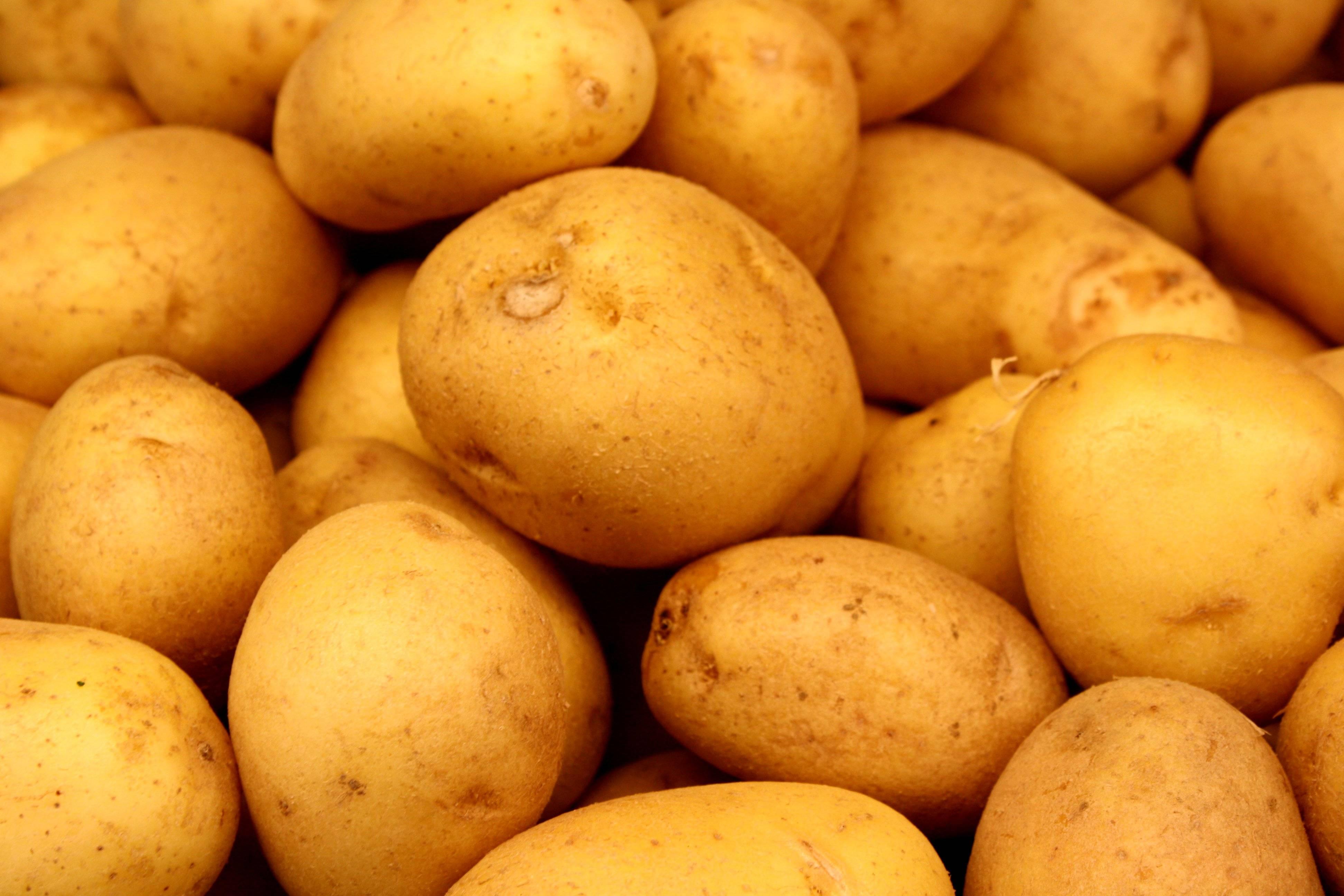 5kg frische Kartoffeln aus Niedersachsen! bei [PostenBoerse]