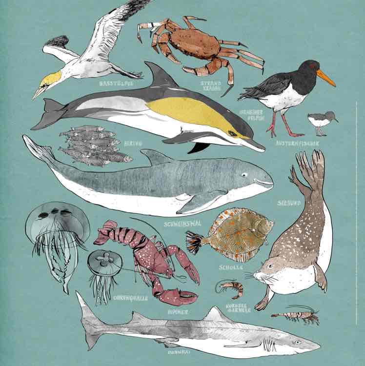 Tiere der Nordsee Poster [gratis]