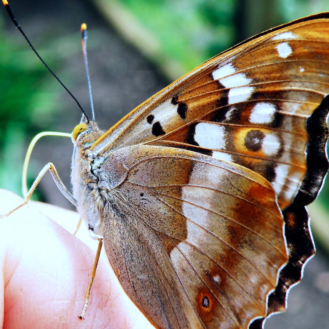 Gratis Schmetterlings-Retter-Paket [BUND]