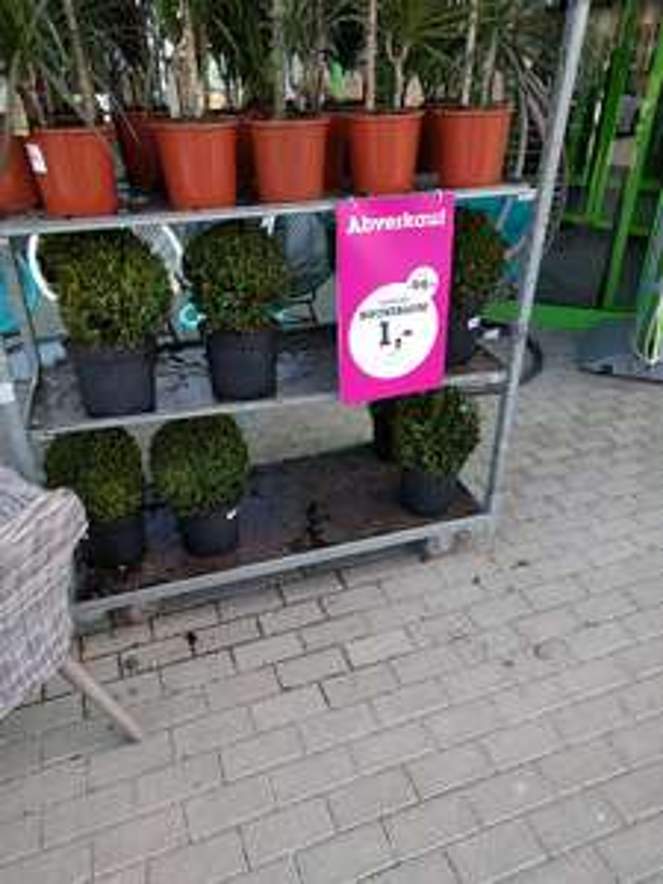 LOKAL MöMAX Eching. Buchsbaum 1€ statt 19,99€