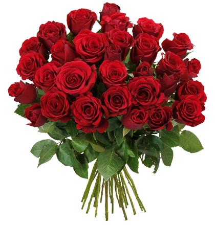 Blume Ideal Angebot: 43 ROTE ROSEN XXL ( + ggf. 9% Shoop Cashback )