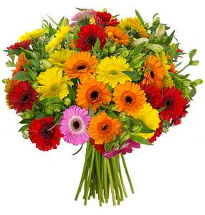 Blumen mit 15% Rabatt, zzgl 9% via shoop bei Blume Ideal