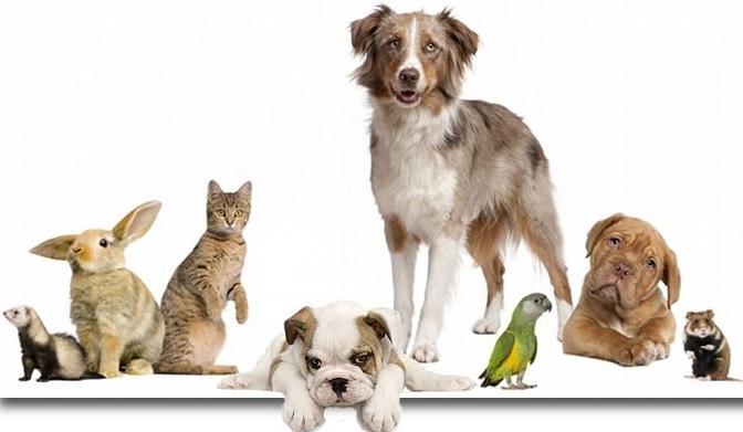 Übersicht der Tierfutterangebote der KW 19 / 2017 [Bundesweit]