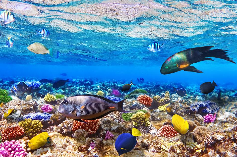 Last Minute 14 Tage Hurghada ( Ägypten ) All inclusive Deluxe-Doppelzimmer ab Hannover für 361€ p.P. bei einer Reise zu zweit !