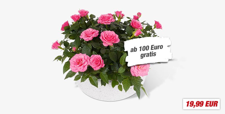 Freitag 12.05. von 20-22 Uhr bei Toom für 100€ einkaufen und Muttertagsschale mit Rosen im Wert von 19,99€ kostenlos dazubekommen [Toom]