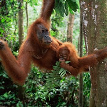 Flüge: Borneo [November - Februar] - Exote: von Amsterdam nach Kota Kinabalu ab nur 395€ inkl. Gepäck