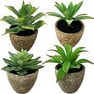 Pflanzen Angebote