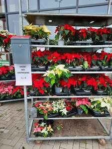 [LOCAL] Weihnachtsstern ab 1€ & Weihnachtsbaum ab 5€ über Vertrauenskasse