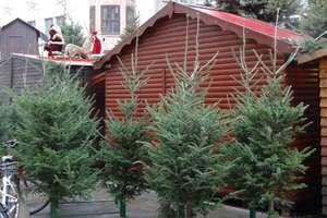 [lokal Leipzig] Stadt Leipzig verschenkt >700 Weihnachtsbäume ab 22.12.